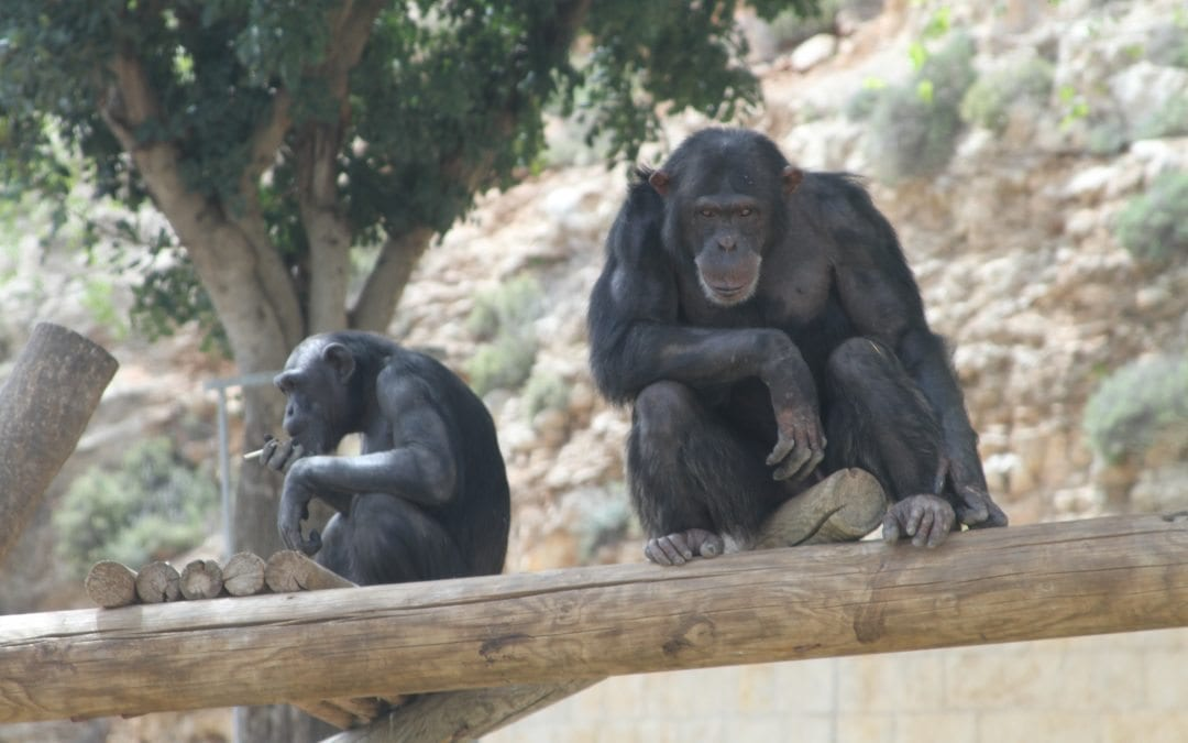 Latest ADHD News & A Smoking Chimp